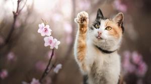 Blossom Depth Of Field Pet 2000x1426 Wallpaper