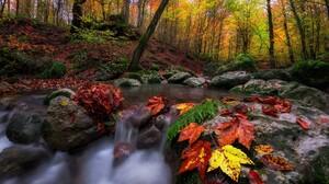 Earth Fall Forest Leaf Rock Stream 2000x1335 Wallpaper