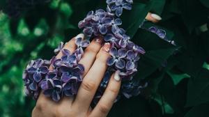 Lilac 1920x1280 Wallpaper