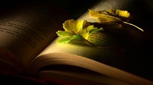 Books Dark Leaves 2560x1440 Wallpaper