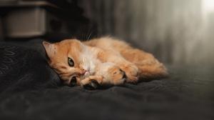 Cats Animals Mammals Indoors Feline 3840x2160 Wallpaper
