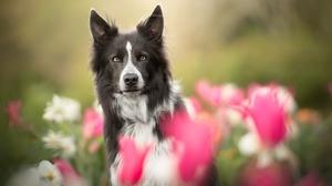 Dog Flower Pet 2048x1365 Wallpaper