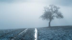 Field Fog Tree Winter 2560x1600 wallpaper
