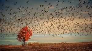 Bird Flock Of Birds Goose Tree 2024x1270 Wallpaper