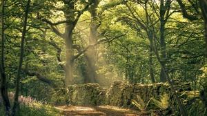 Forest Greenery Nature Sunbeam Tree 2048x1344 Wallpaper