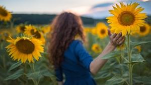 Field Girl Hand Rear Sunflower 2047x1231 Wallpaper