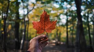Fall Leaf 6000x4000 Wallpaper
