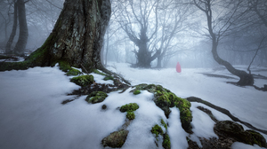 Trees Wood Forest Nature Moss Snow Snow Covered Winter Cold Mist Hood Red Hood Landscape Photography 2400x1600 Wallpaper