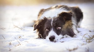 Dog Pet Winter Snow 2560x1552 wallpaper