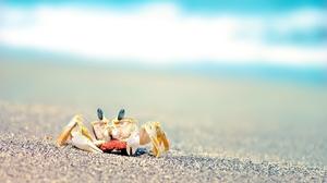 Crab Sand Wave 2560x1600 Wallpaper