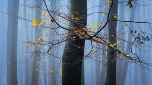 Fall Fog Tree 2048x1280 Wallpaper