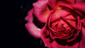 Earth Rose 3840x2160 Wallpaper
