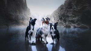 Australian Shepherd Border Collie Dog Pet 2048x1365 Wallpaper