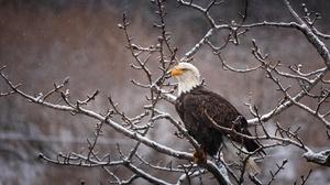 Bald Eagle Bird Of Prey Eagle Snowfall Wildlife 2048x1285 Wallpaper