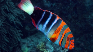 Animal Fish 2560x1920 Wallpaper