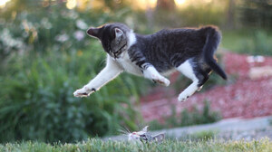 Bokeh Cat Jump 2048x1358 Wallpaper