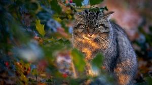 Animal Wildcat 2048x1365 Wallpaper