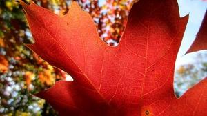 Fall Leaf Maple Leaf 5152x3864 Wallpaper