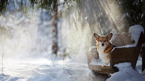 Bench Corgi Dog Pet Snow Sunbeam Winter 2000x1333 Wallpaper