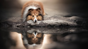 Dog Outdoors Water Reflection Animals Mammals 2048x1365 Wallpaper