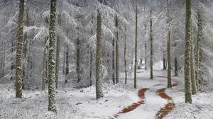 Nature Winter Cold Ice Snow Pathway Outdoors Forest Trees 1920x1080 Wallpaper