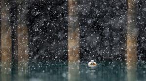 Bird Duck Snowfall Wildlife 3828x2145 Wallpaper