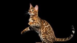 Animal Brown Cat Leopard Cat 4915x3277 Wallpaper