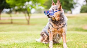 Dog Pet 5398x3599 Wallpaper