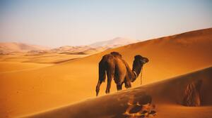 Desert Landscape Sand Dunes Nature Outdoors Far View Camels Footprints Sky Africa 2808x1872 Wallpaper