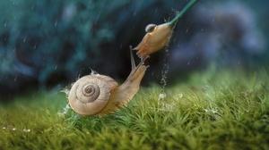 Flower Grass Macro Nature Rain Snail 2048x1367 wallpaper