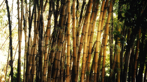 Earth Bamboo 1920x1200 Wallpaper