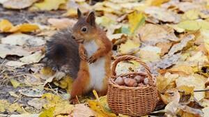 Acorn Basket Fall Leaf Nut Squirrel 2000x1400 Wallpaper