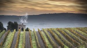 Italy Landscape Nature Tuscany Vineyard 2047x1235 Wallpaper