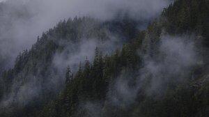 Nature Pine Trees Mist Clouds Forest Landscape 2048x1364 Wallpaper