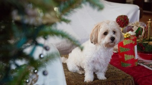Dog Baby Animal Christmas Puppy Pet 2000x1333 Wallpaper