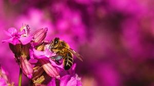 Bee Blur Flower Insect Macro Pink Flower 7360x4912 Wallpaper