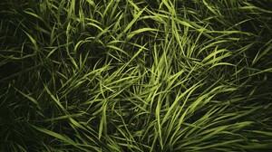 Grass Green 1920x1200 Wallpaper