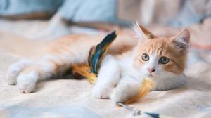 Animals Cats Mammals Indoors 3000x2000 Wallpaper