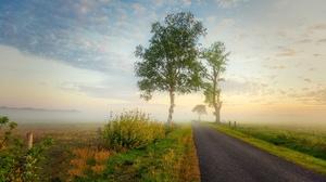 Fog Tree 2008x1339 wallpaper
