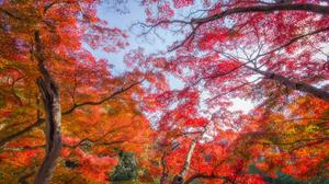 Canopy Sky Earth Tree Branch Foliage Fall 4800x3000 Wallpaper