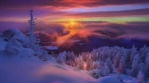 Sunset Snow Fir Tree 2510x1599 Wallpaper