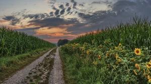 Corn Nature Summer Sunflower Sunset 3840x2160 Wallpaper