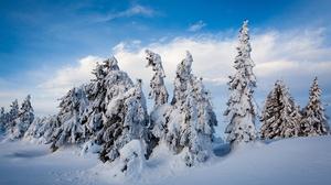 Fir Tree Norway Snow Winter 3600x2400 Wallpaper