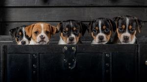 Dog Pet Baby Animal 2048x1263 Wallpaper