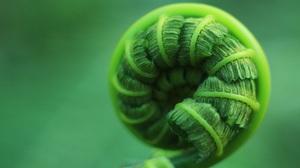 Fern Macro Leaves Nature Plants Pattern Green Closeup 5184x3456 Wallpaper