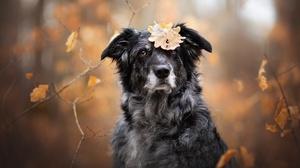 Depth Of Field Dog Pet 2048x1365 wallpaper