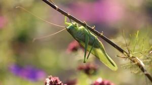 Grasshopper Insect Macro Wildlife 3840x2160 Wallpaper