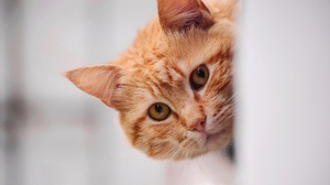 Cat Pet Stare 3840x2160 Wallpaper
