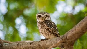 Bird Branch Bokeh Wildlife 3840x2160 Wallpaper