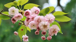 Blossom Branch Flower Macro Sakura Spring 2048x1378 Wallpaper